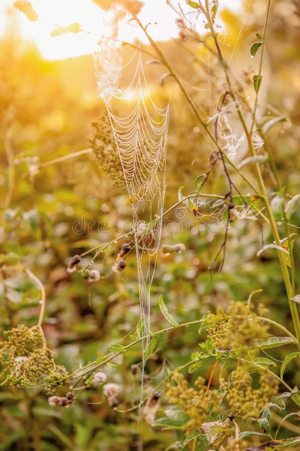 Spider web in the thickets of autumn grass. Field in Sunny autumn day stock photography