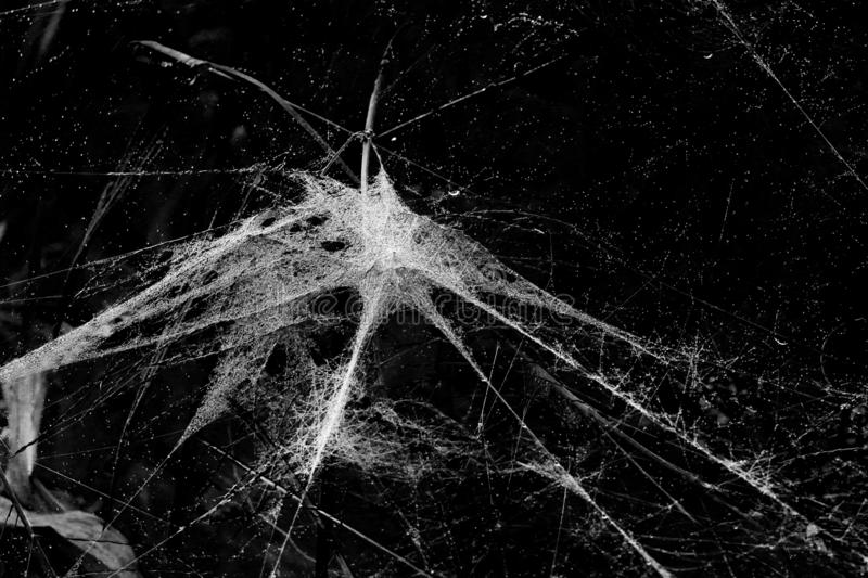 Spider web with 6 threads leading to the middle point connecting everyting in black and white royalty free stock images