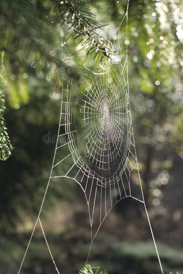 Spider Web On Tree Free Public Domain Cc0 Image