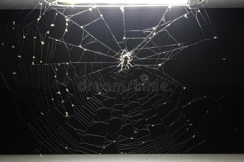 Spider on spider web under a light. Of a bridge during night royalty free stock photo