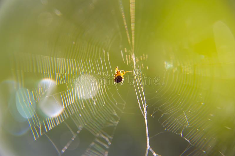 Spider web under the sun rays - macro photo royalty free stock photography