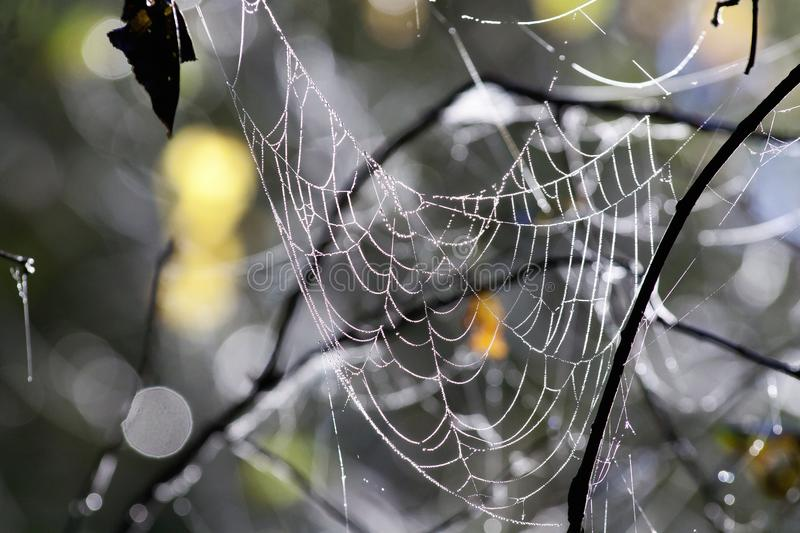 Spider Web, Water, Branch, Close Up royalty free stock photo
