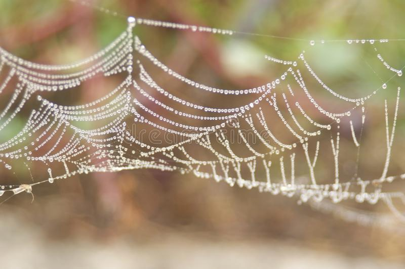 Spider Web, Water, Close Up, Moisture stock images