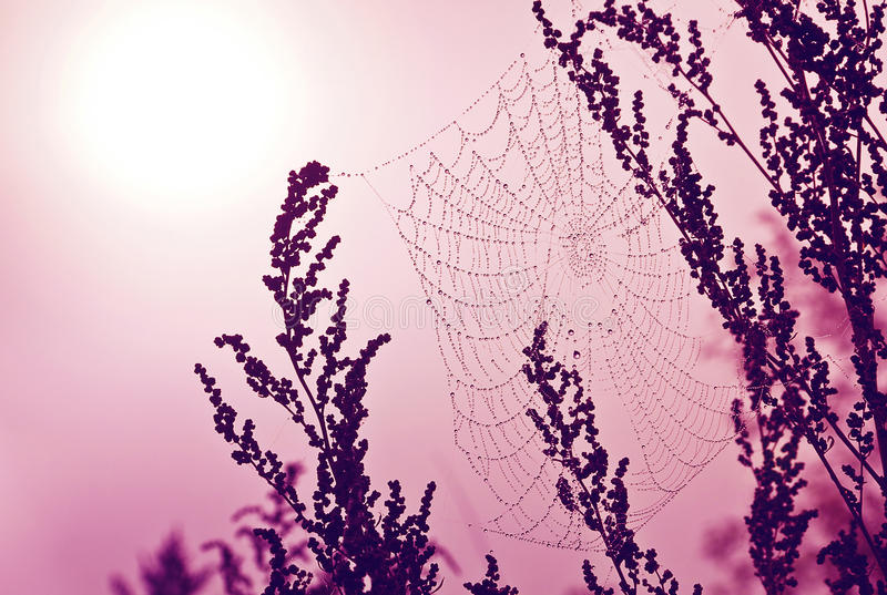Download Spider web in water drop stock photo. Image of abstract - 27213012