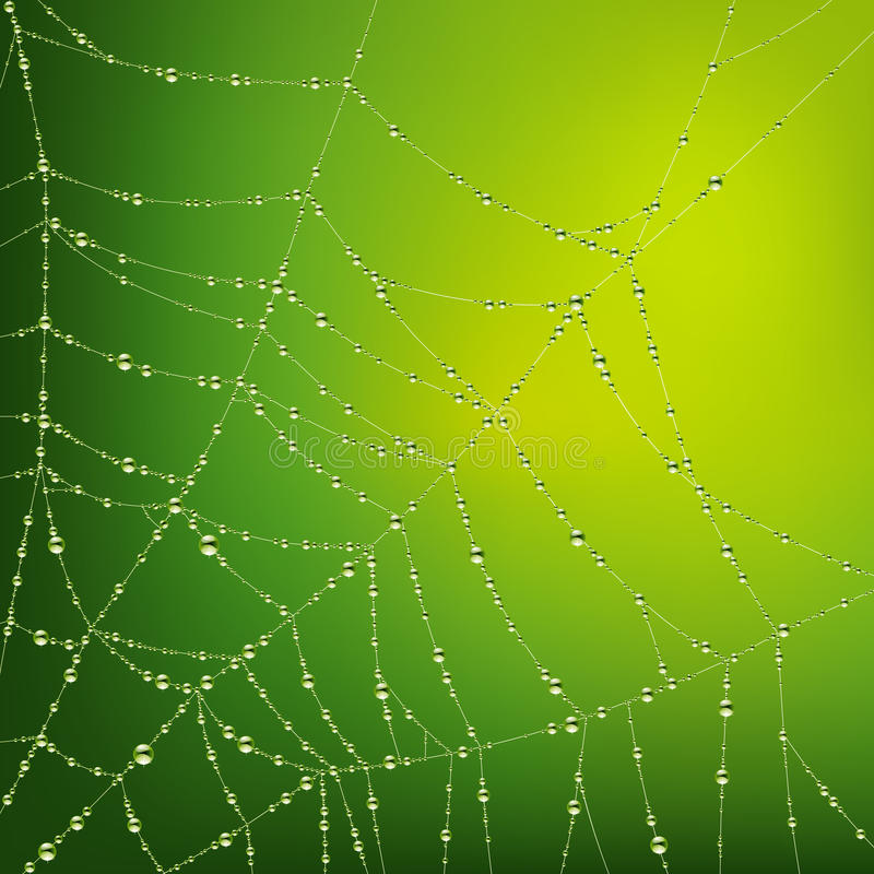 Spider web with water drops vector illustration