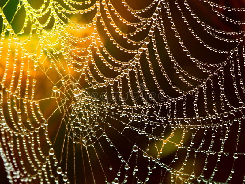 Spider Web, Water, Moisture, Light royalty free stock image