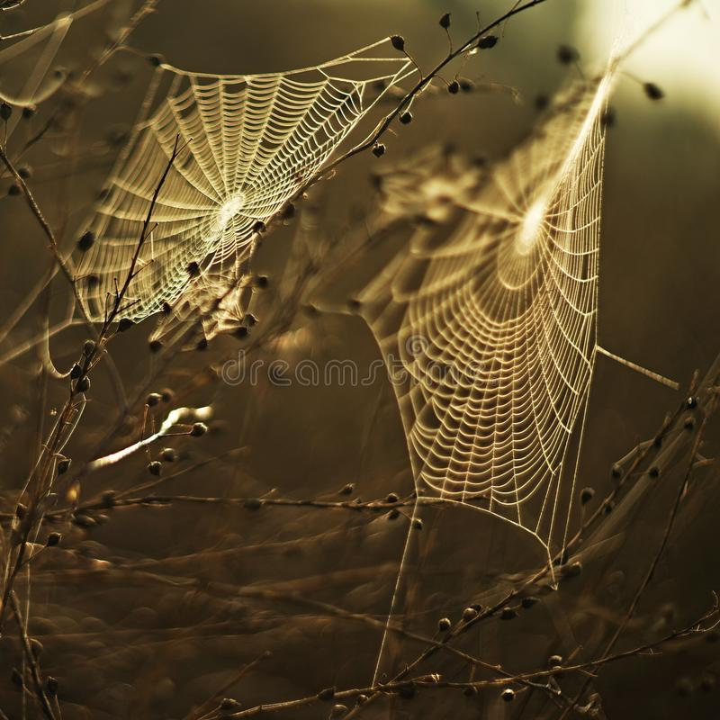 Spider Web, Water, Moisture, Morning royalty free stock image