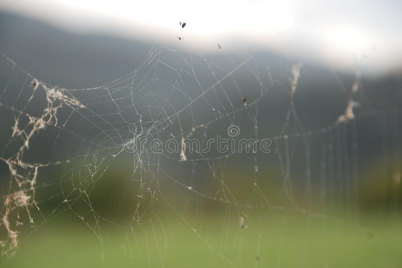 Spider Web, Water, Moisture, Sky royalty free stock images