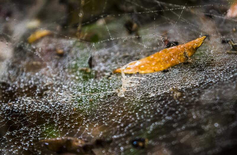 Water beats from water tears on spider web detail royalty free stock photos