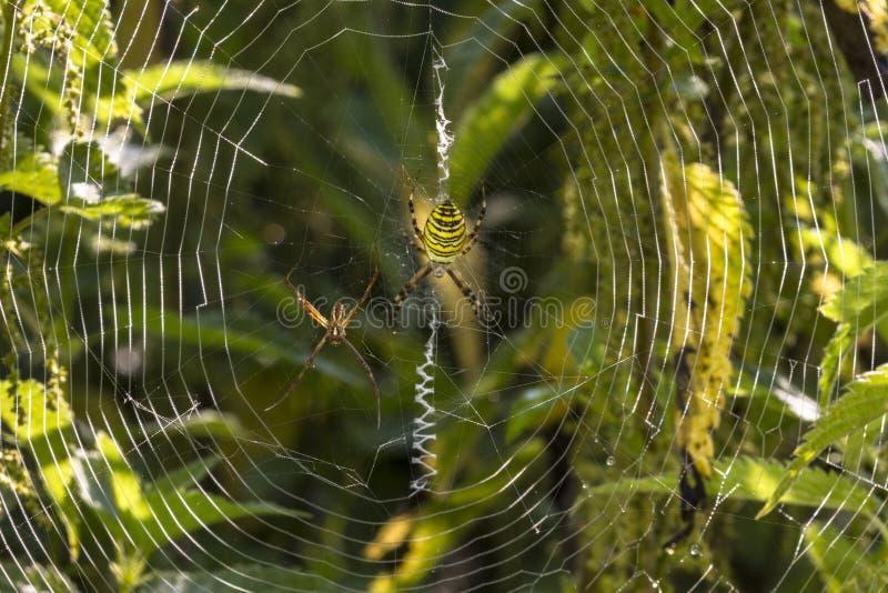 Spider Web, Wildlife, Vegetation, Water royalty free stock image
