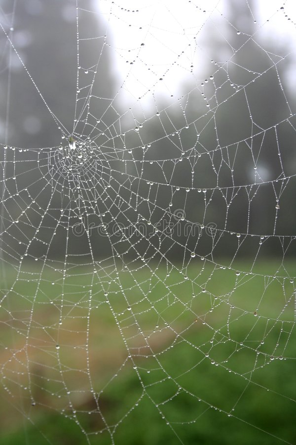 Free Spider Web With Dew 3 Stock Image - 1626151