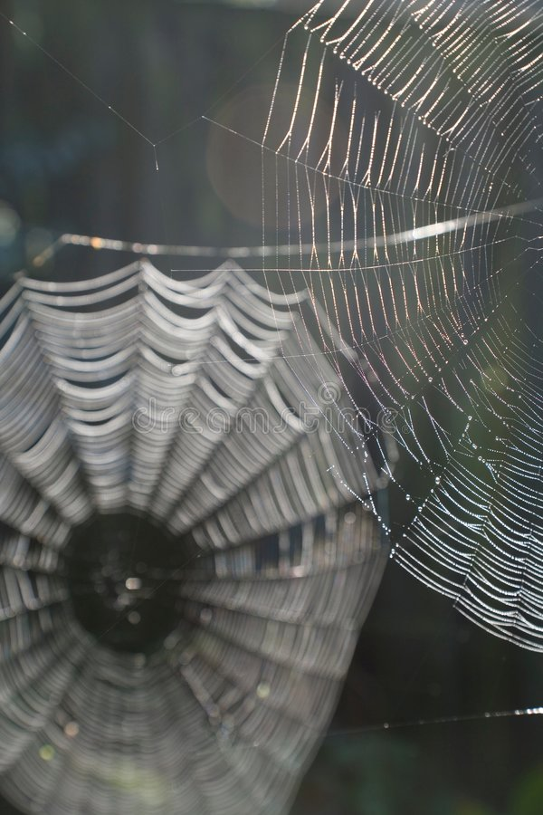 Spider webs. Against a dark background royalty free stock photo