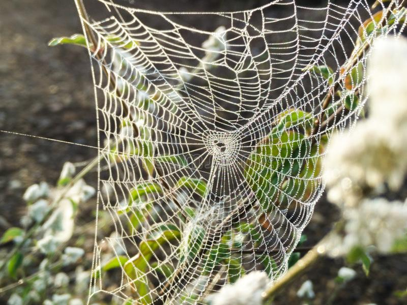 The spider webs. Drops of water on spider webs stock photos