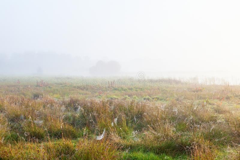 Spider webs in the grass on the misty moors royalty free stock images