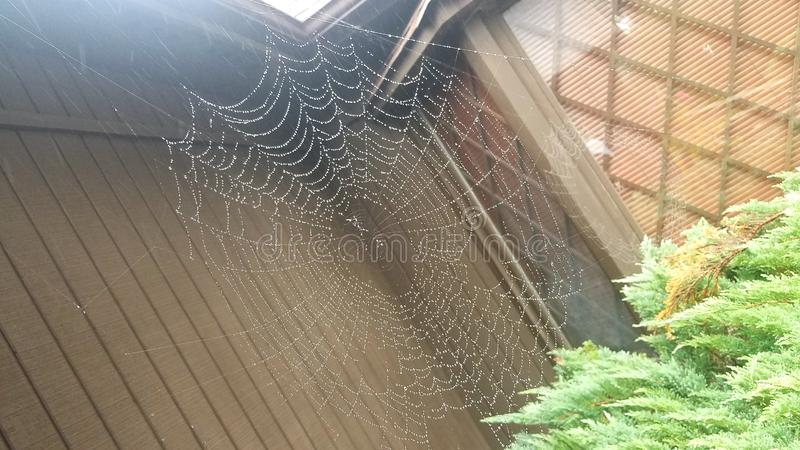 Spider web in rain royalty free stock images