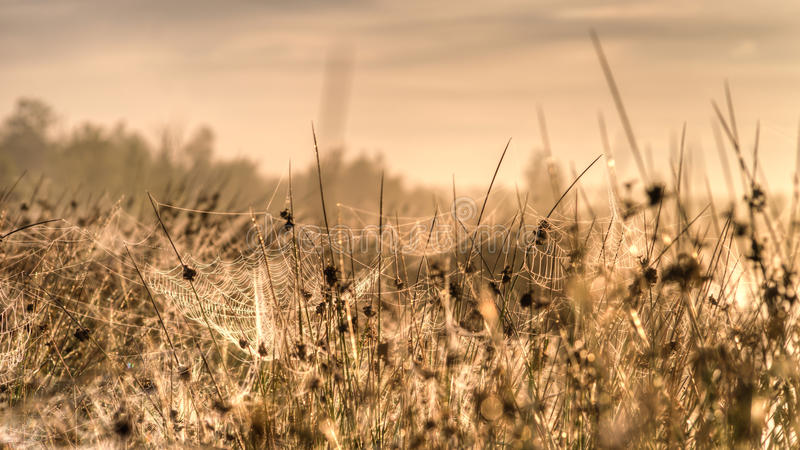 Spider webs in the rays of the rising sun. Spider webs in the grass on a meadow in the rays of the rising sun royalty free stock photography