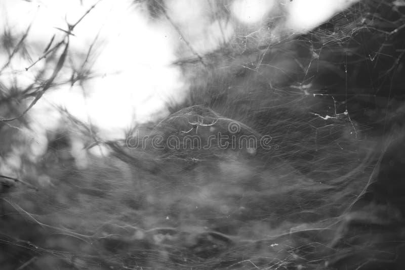 Spider Wed stock afbeeldingen