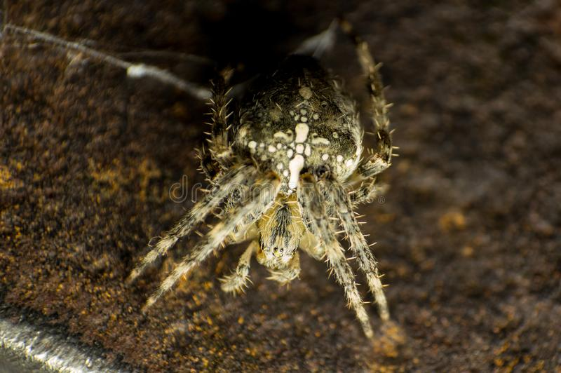 The spider went on the hunt. The spider went hunting, a small fluffy dangerous predator with thorns on its feet. Sits in anticipation on old rusty metal royalty free stock photo