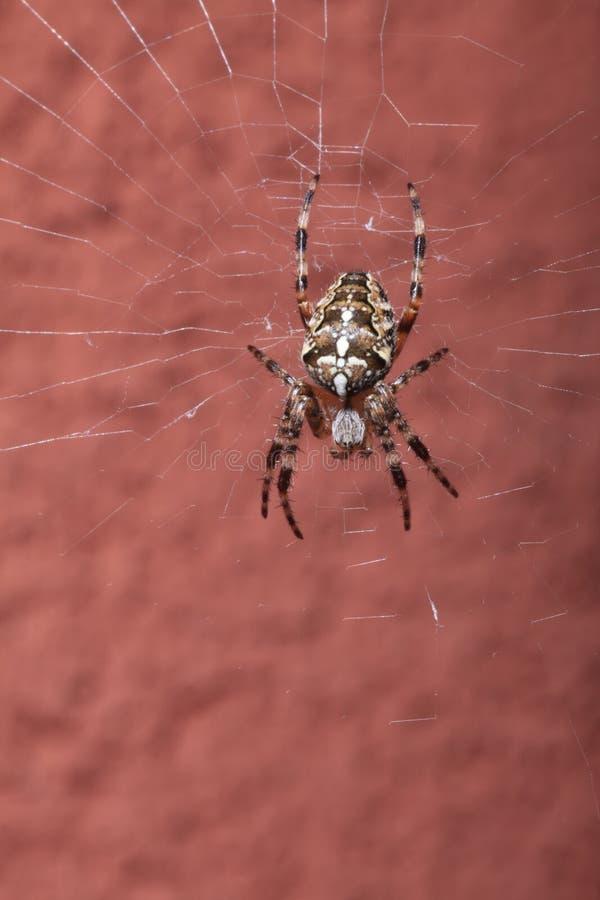 Spider on wet web