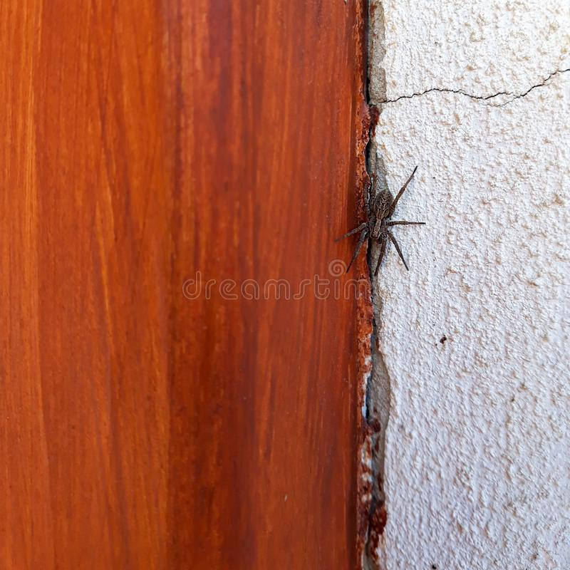 Spider between wooden door and white wall royalty free stock image