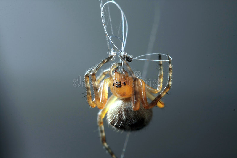 A spider for work royalty free stock photos