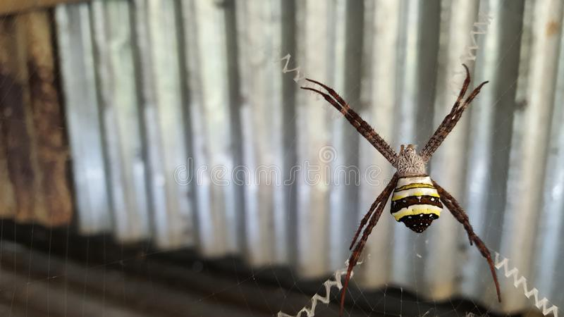 Spider working royalty free stock image