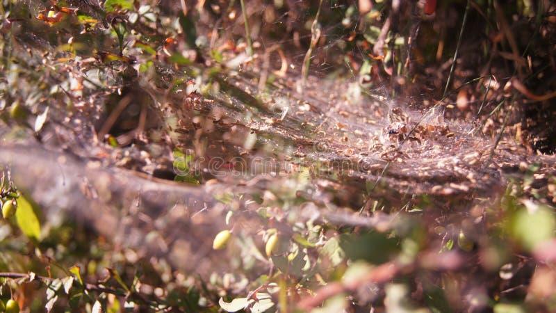 Spider world stock image