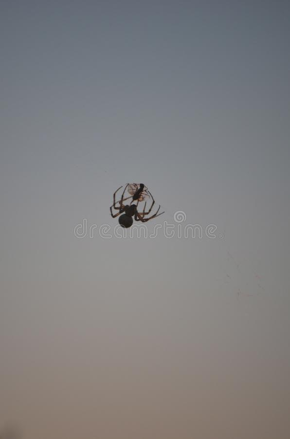 Spider caught its prey. Scene against the sky. royalty free stock image