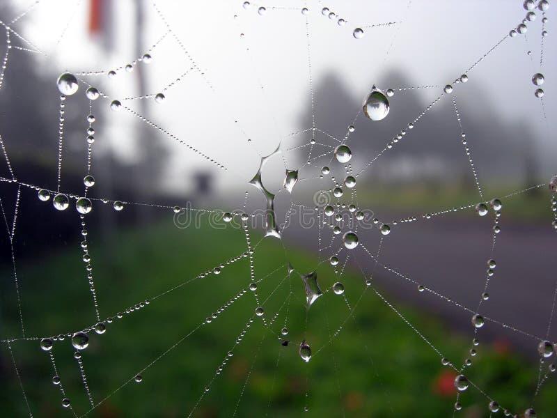 Spidernet fotografía de archivo libre de regalías