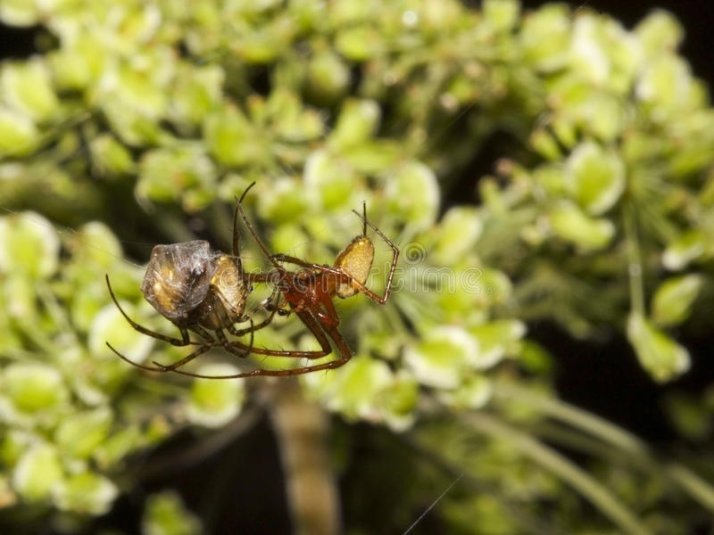 Download Spiders stock photo. Image of colors, nature, image, insect - 11038152