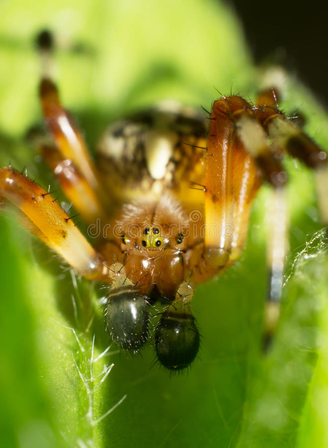 Download Spiders stock image. Image of creature, animal, crab - 28659851