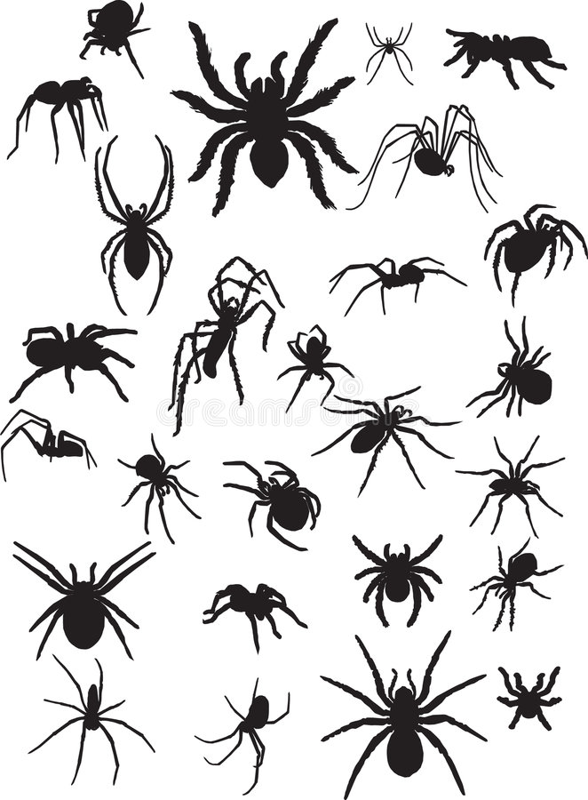 Download Spiders stock vector. Image of pattern, death, poisonous - 4888372