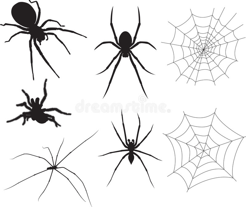Download Spiders Royalty Free Stock Photo - Image: 7784855