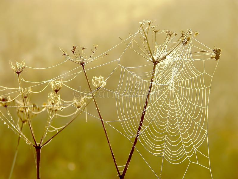 Spiders cobweb on a meadow at sunrise. Spider web on a meadow in the rays of the rising sun in autumn stock photos