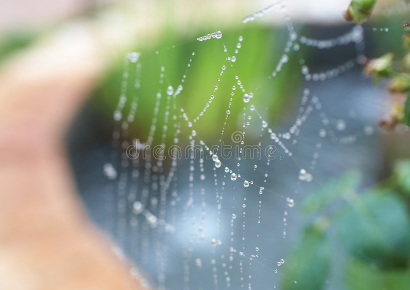Download Spiders web stock photo. Image of droplet, trap, nature - 7112570