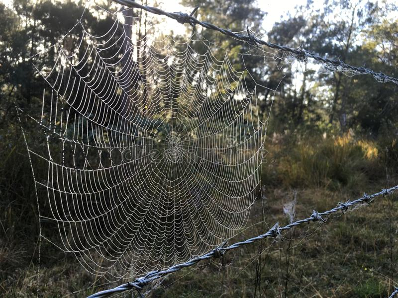 Spiders web on barbed wire with morning dew royalty free stock image