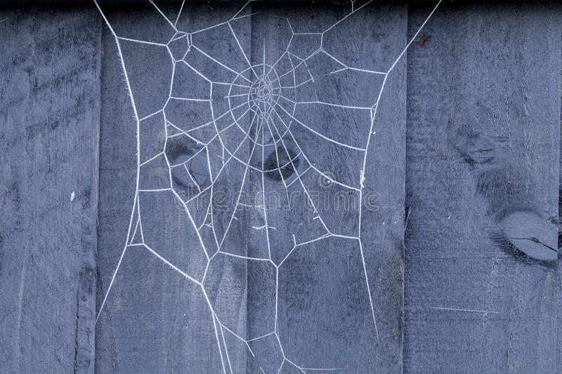 Spiders web on fence covered in ice. Spiders web on a blue wooden fence covered in ice crystals during winter stock photography