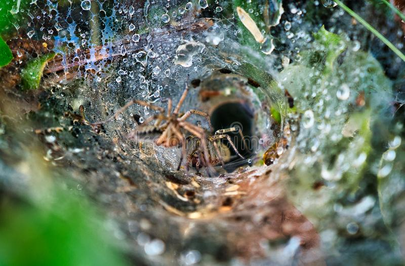 Spiders and web cave in the forest royalty free stock photography