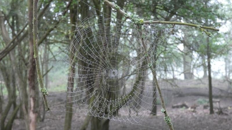 Spiders web early morning in the forest 6 royalty free stock photography
