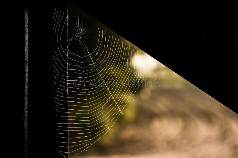 Spiders web royalty free stock images
