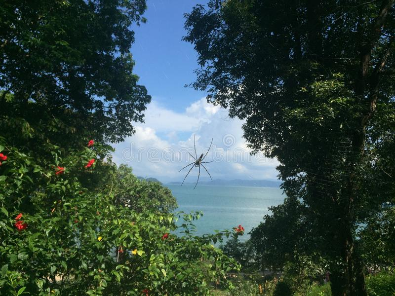 Spiderweb在海附近的热带森林里 免版税库存图片