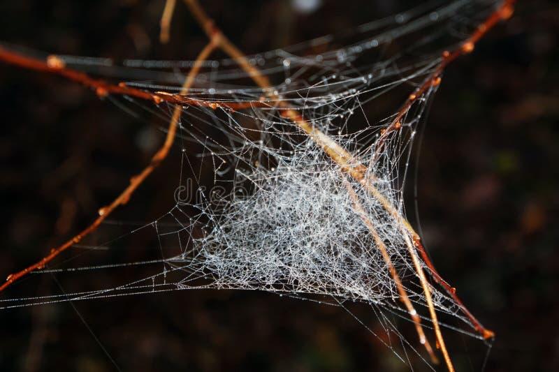 Spiderweb στα ξύλα στοκ φωτογραφίες με δικαίωμα ελεύθερης χρήσης