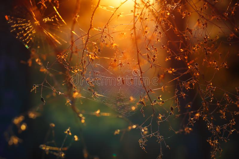 Spiderweb в лесе стоковые изображения rf