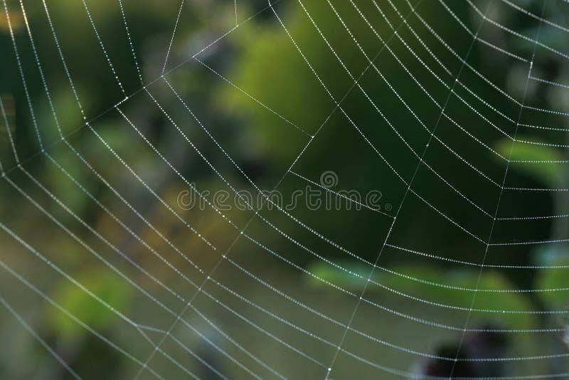 Spiderweb в солнечном свете утра с капелькой стоковая фотография rf