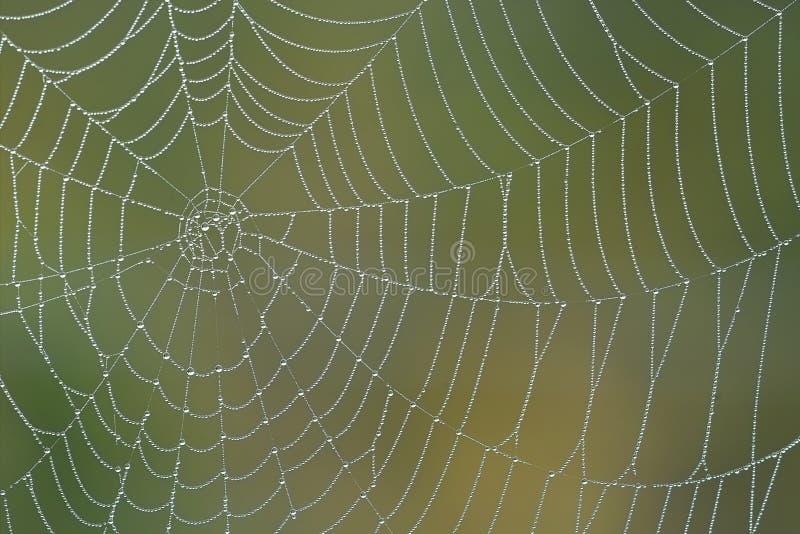 Download Spiderweb утра стоковое изображение. изображение насчитывающей туман - 277279