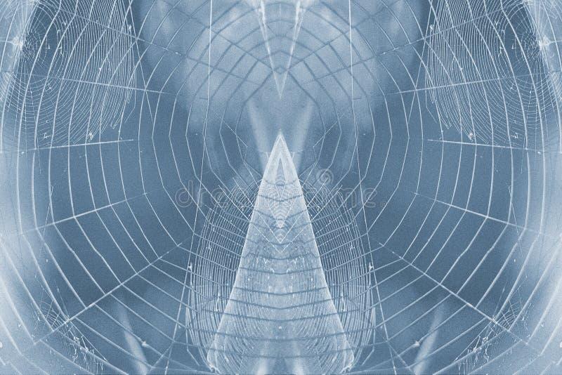 Spiderweb fotografia stock