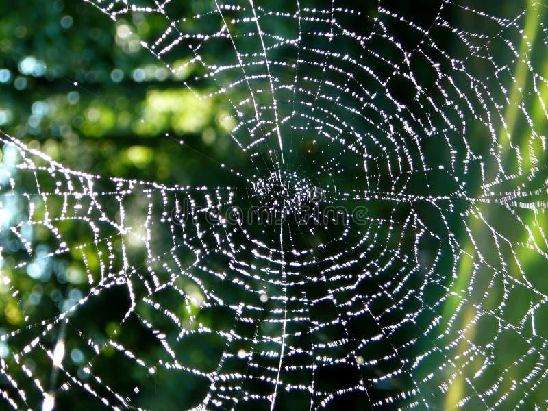 spiderweb стоковые фото