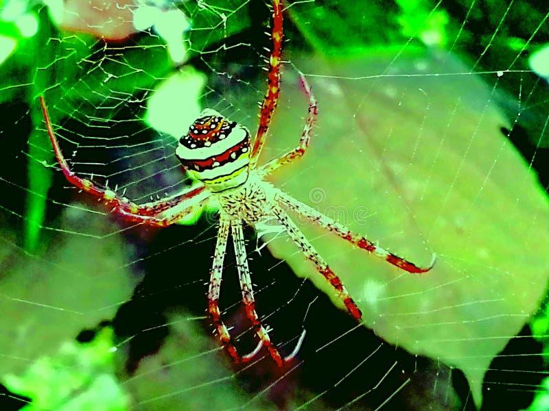 spiderweb стоковое изображение