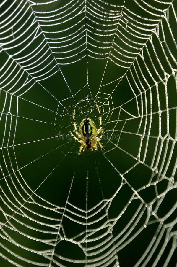 Download Spiderweb stock image. Image of amazing, fragility, isolated - 13671973