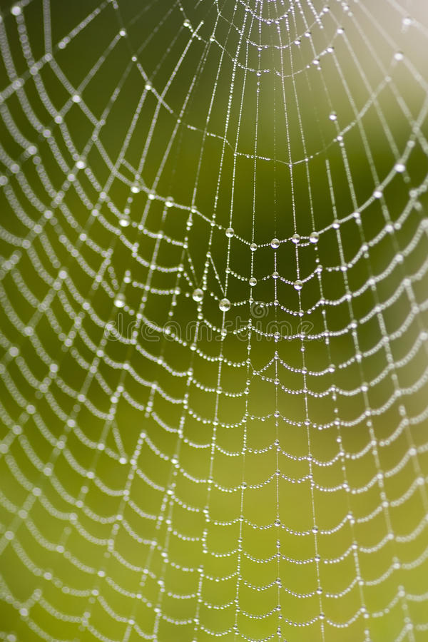 Download Spiderweb stock photo. Image of spider, close, macro - 16234734